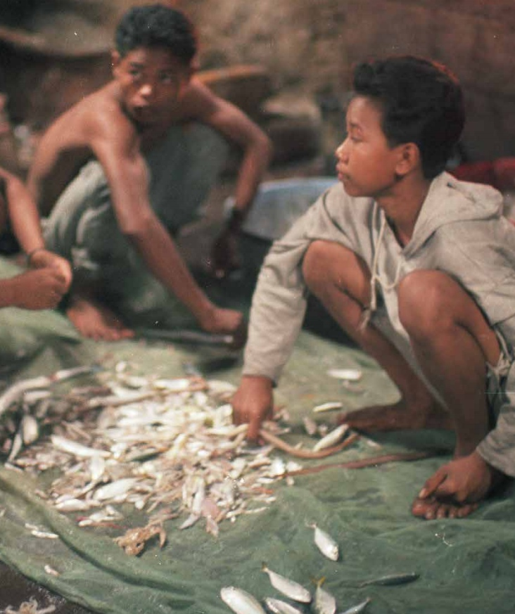 Child labor for fish